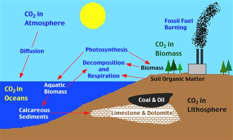 Define Carbon Sink Geography by The Importance Of Carbon For Climate Regulation