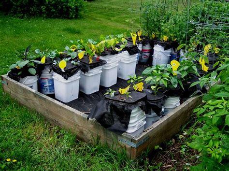 14 best diy self watering container garden ideas balcony