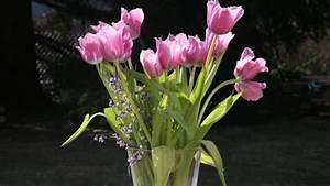 Blumen Und Ihre Bedeutung : blumen und ihre bedeutung la t blumen sprechen ~ Frokenaadalensverden.com Haus und Dekorationen