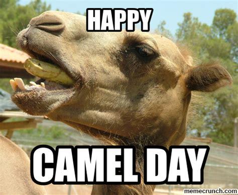 Camel Memes - camel