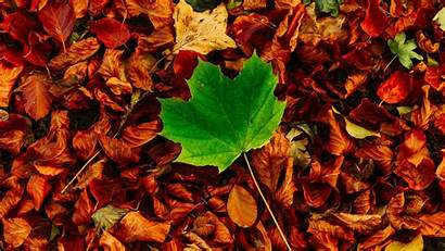 Leaves Autumn 5k Wallpapers 4k Resolutions Ultra