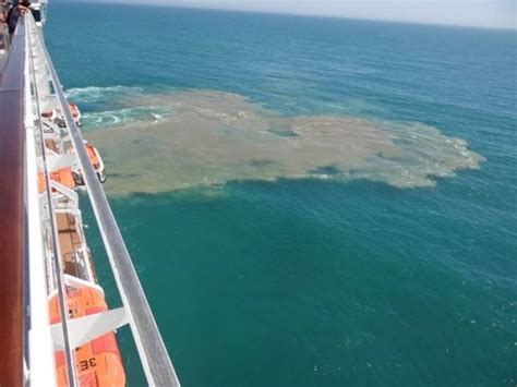 This Is How Much Sewage Cruise Ships Dump Into The Ocean ...