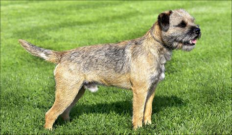 Know These Terrier Types Before You Make This Frisky Your Pet