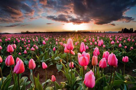 chambre des metiers inscription chs de fleurs aux pays bas chambre237