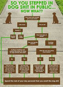 What To Do When You Step In Dog Poop