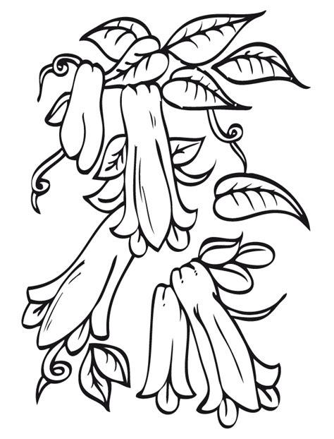 flor copihue dibujalia dibujos para colorear plantas flores flor copihue