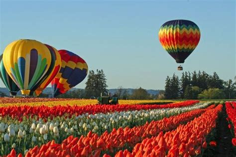 tulips festival in usa worlds most dramatic cherry blossom and tulip festivals wicked good travel tips