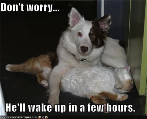 Border Collie Meme - 67 best images about border collie tribe on pinterest funny sayings search and dog humor