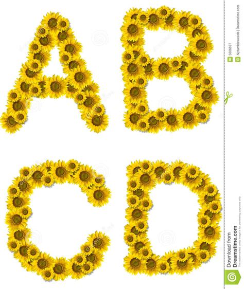 sunflower letters abcd royalty  stock photography