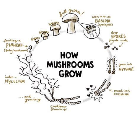 how do mushrooms grow how to grow your own mushrooms 1 million women