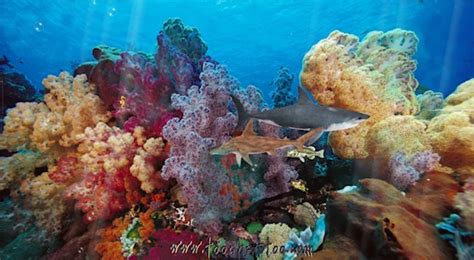 aquarium des fonds d 233 crans anim 233 s gratuits