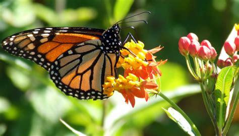 case delle farfalle da vedere lifegate
