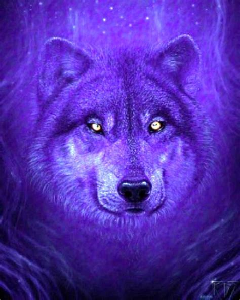 Blue And Purple Wolf Wallpaper by 17 Best Images About Purple Run With The Wolf On