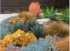 Seaside Colorful Succulent Garden