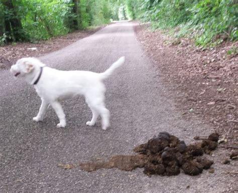 keine vegane ernaehrung fuer klever hunde kle blatt blog