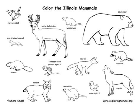 Illinois Habitats, Mammals, Birds, Amphibians, Reptiles