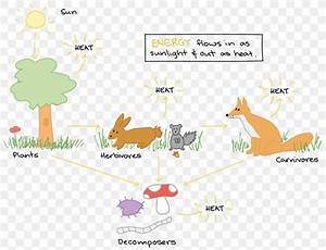 Energy Flow Ecosystem Food Chain Diagram Food Web  Png