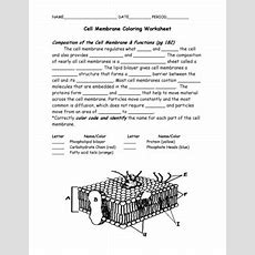 Fillable Online Dentonisd Cell Membrane Coloring Worksheet  Denton Independent School