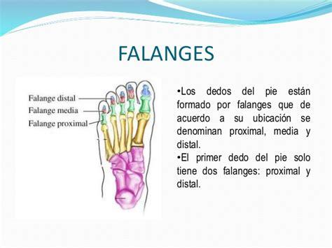 nombre de los dedos del pie sistema oseo  psicomotricidad