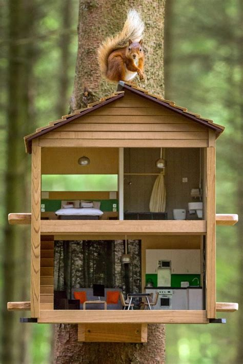 red squirrel lodge luxury feeder