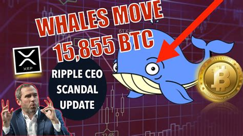 For this reason, we've decided to provide you with the best places that help you. BREAKING NEWS! Whales Move MASSIVE Amounts of Bitcoin ...