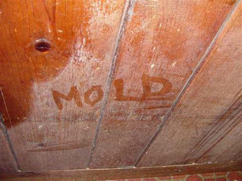 mold grow