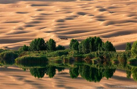 Oasis in Sahara desert.   National geographic photography ...