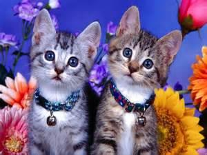 pet cats pets3000 pet safe
