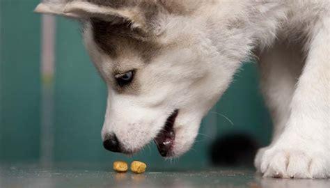 dog food  huskies   feed huskies
