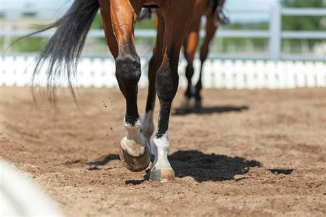 horse leg dressage horses lower close hooves broken motion why bones thin shutterstock footing competition they arena strong long euthanize