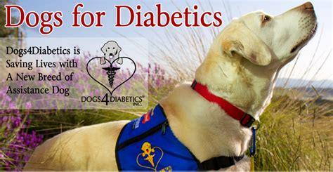dogsdiabetics healthypets