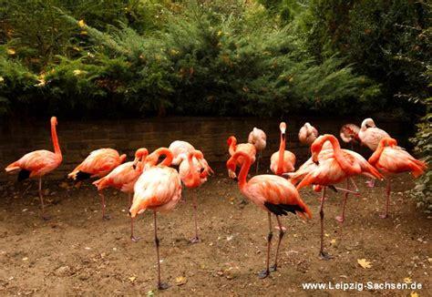 Ulrich Zoologischer Garten Offnungszeiten by 187 Zoo Leipzig Fotos Veranstaltungen 214 Ffnungszeiten