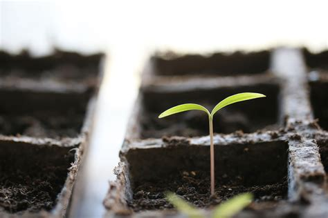seed germination requirements harvest  table