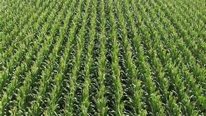 Cornfield Aerial Stock Footage Video 4570808 - Shutterstock