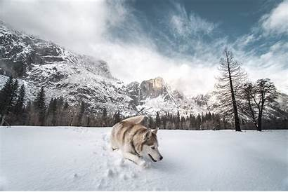 Husky Snow Dog Background Siberian 5k Wallpapers
