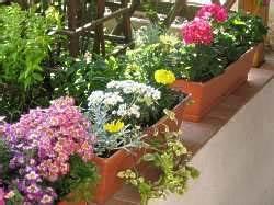 Winterharte Pflanzen Für Balkonkästen : tipps pflege balkonblumen bew serung balkon blumen giesen ~ Orissabook.com Haus und Dekorationen