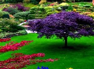 Flower Garden Pictures Free Download Sky Designs Ideas ...