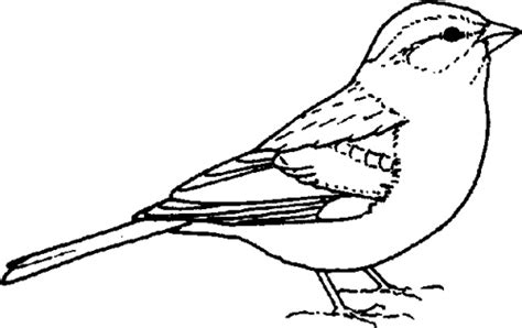 sparrow clipart black and white chipping sparrow flickr photo