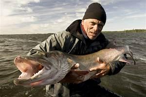 The gallery for --> River Monsters Alaskan Horror