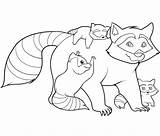 Raccoon Coloring Pages Printable sketch template