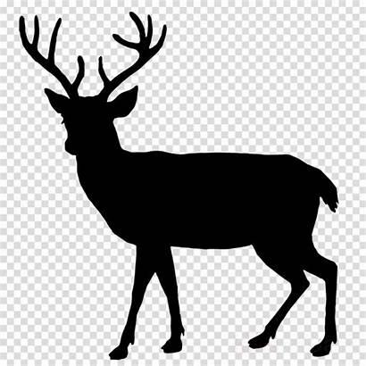 Deer Silhouette Clipart Reindeer Transparent Cerf Mule