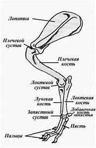 Народные средства от артроза коленных суставов 3 степени