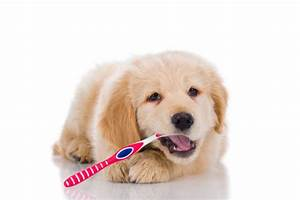 Ask A Dog Trainer: How Do I Train My Dog For Teeth