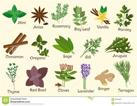 les herbes de cuisine condiment herbes et épices de cuisine illustration de