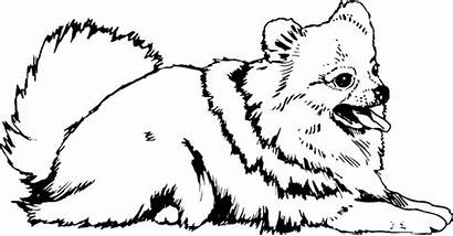 Pomeranian Coloring Dog Colouring Printable Pomeranians Chihuahua