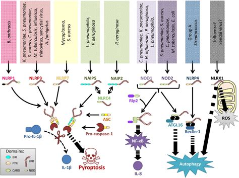lung infections representation involved nlrs various figure