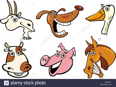 smiling goat cut  stock images pictures alamy