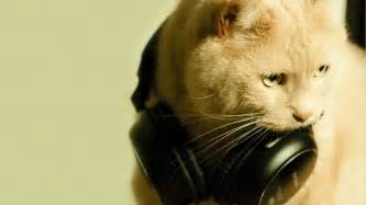 cat headphones cat with headphones hd wallpaper 187 fullhdwpp hd