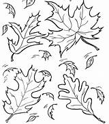 Lettuce Coloring Leaf Drawing Pages Fall Outline Library Clipart Clip Leaves Getdrawings Printable Collapse sketch template
