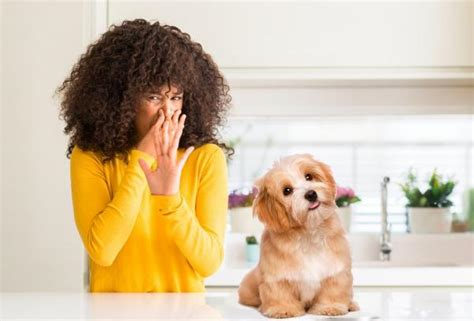 rid  dog smell   house  effective tips